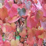 Autunno : I colori incantevoli