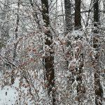 Il bosco con la neve