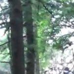 Decine e decine di alberi offesi nei boschi intorno a Orino