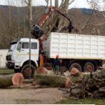 Gavirate – Tagliati cinque grandi platani,erano affetti dalla carie del legno in fase avanzata.