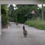 Colonia felina protetta a Besozzo