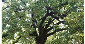 Orino – Duecento anni e non sentirli