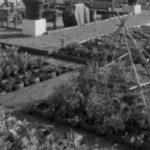 L'attenzione dell'amministrazione comunale per la promozione degli orti urbani