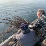 Nel lago di Varese sono state immesse in giorni diversi 150 fascine sparse lungo le sponde.
